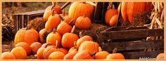 Pumpkins Facebook Cover