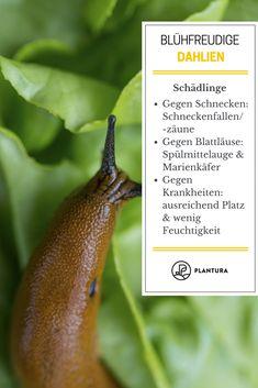 79 besten Schädlinge im Garten Bilder auf Pinterest | Pflanzenschutz ...