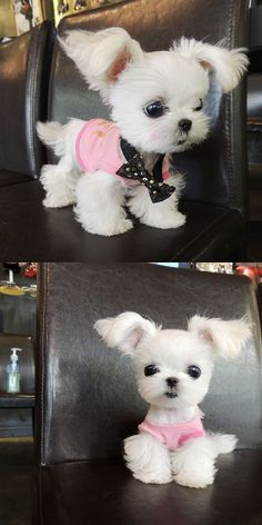 I know its not a Yorkie, but it has to be the cutest lil puppy ever!!! Soo adorable!! For more please visit: http://www.flyfreshforev...