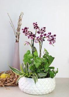 Пасхальная коллекция с орхидеей фаленопсис в окружении яркой зелени