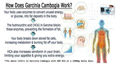 Visit our website to read our full review on lipo g3 garcinia cambogia and to get a free trial offer today.