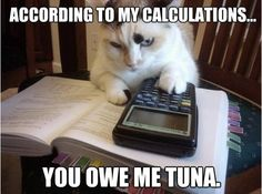 You owe me tuna