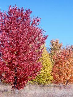 Autumn in Youngdahl pk. 2012, St. Joseph, mo., via Flickr.