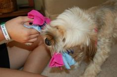Here's a great, easy craft project your kids can do. And it will make your dog happy.