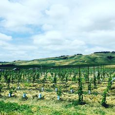 Napa Valley bound! Enjoying this beautiful drive out to wine country. Unfortunately, not headed to #bottlerock but it's on the list for next year! #california #napa #family #canadianincalifornia #hamont #the6ix #travel http://tipsrazzi.com/ipost/1523482922124270097/?code=BUkf6Val1oR