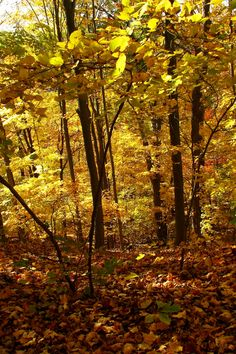 """griffotography: """"  Golden Foliage by Ken Griffith """""""