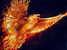 Image detail for -To Download Fire Eagle wallpaper click on full size and then right ...