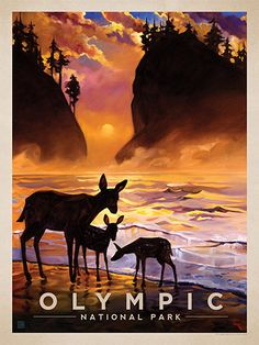Olympic National Park: Magical Moment - Anderson Design Group has created an award-winning series of classic travel posters that celebrates the history and charm of America's greatest cities and national parks. Founder Joel Anderson directs a team of talented artists to keep the collection growing. This oil painting by Kai Carpenter celebrates the majestic beauty of Olympic National Park.<br />