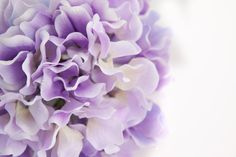 Silk Flower Hydrangeas  60 Large Hydrangea Blossoms by simplyserra