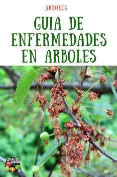 160 Ideas De Matas Flores Y Frutos Cultivo De Plantas Jardineria Y Plantas Cultivo De Hortalizas