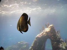 ryba rafowa
