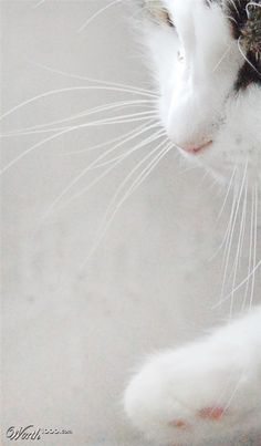 """Because his long white whiskers tickled, I began every day laughing."" --Janet F Faure"