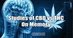Do CBD and THC Have Any Effects on Memory? - https://elixinol.com/blog/cbd-thc-effects-on-memory?utm_source=rss&utm_medium=Friendly+Connect&utm_campaign=RSS #cbd #hemp