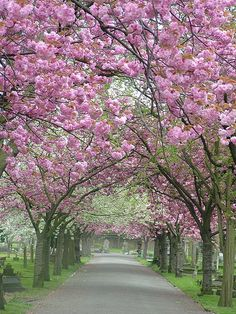 Bring on the blossom! Beautiful World, Beautiful Gardens, Beautiful Flowers, Beautiful Places, Beautiful Pictures, Spring Scenery, Tree Lined Driveway, Spring Landscape, Blossom Trees