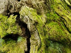 Moss on the Chestnut of 100 Horses — The Oldest Living Things in the World