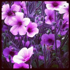@katiescarey Purple flowers #gettycenter (Taken with instagram)