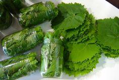 Συντήρηση αμπελόφυλλων σε βάζα ή στην κατάψυξη Recipe Boards, Fresh Rolls, Celery, Asparagus, Sweets, Canning, Fruit, Vegetables, Ethnic Recipes