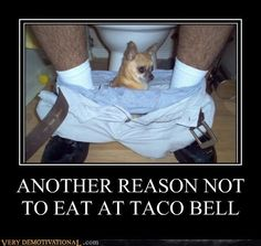 Chihuahua Humour. Lol! Now that's a true loyal and loving dog!! Lol!