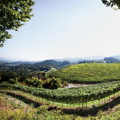 Best Napa Valley Wineries to Visit according to Food & Wine