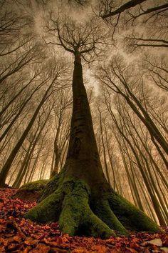 Tree guardians