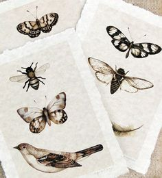 Love Laurens work...butterfly art bird feather cicada print