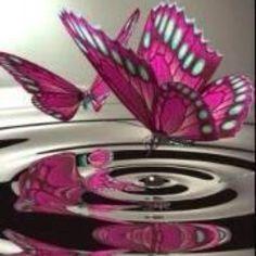 absolutely beautiful ~ love my butterflies ~
