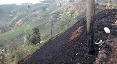 Rize'de vatandaşın yaktığı anızlar elektrik direklerini yaktı