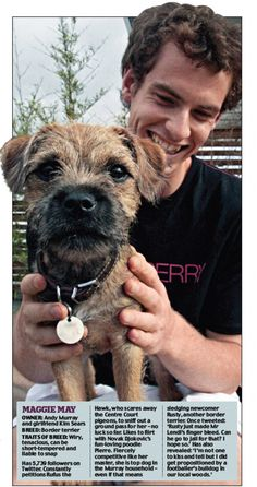 Tennis player Andy Murray with his border terrier, Maggie May Border Terrier Puppy, Terrier Puppies, New Champion, Andy Murray, Purebred Dogs, Brown Dog, Little Dogs, Dog Owners, Dog Breeds