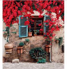 Resultado de imagem para flores sobre janela com plantas
