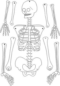 In this category you can see different Human skeleton coloring pages and print them. We regularly update the database of coloring pages Skeleton For Kids, Skeleton Craft, Skeleton Dance, Human Skeleton, Skeleton Pics, Skeleton Bones, Science Lessons, Teaching Science, Science Activities