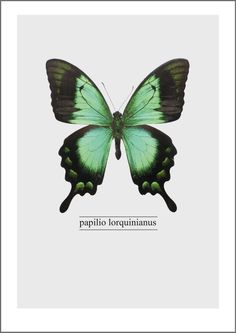 FREE Printable Green Butterfly Poster