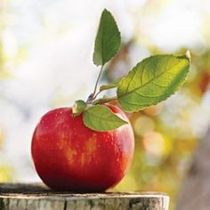 Fruit - Red apple with green leave on a tree trunk . Photo art on the beauty of nature in its simplicity . Fruit And Veg, Fruits And Vegetables, Fresh Fruit, Apple Tree, Red Apple, Apple Fruit, Apple Varieties, Cider House, Apple Harvest