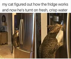25 Consensual Belly Rubbin' Caturday Memes To Make This Day The Best Day - World's largest collection of cat memes and other animals Funny Animal Memes, Cute Funny Animals, Funny Animal Pictures, Cat Memes, Funny Cute, Cute Cats, Hilarious, Funny Memes, Animal Pics