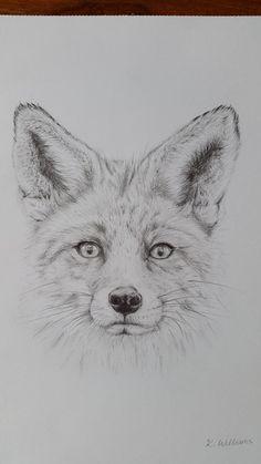 Read the full title Fox pencil drawing, Original / Giclee Print A4, Fox Print, Elegant Pencil