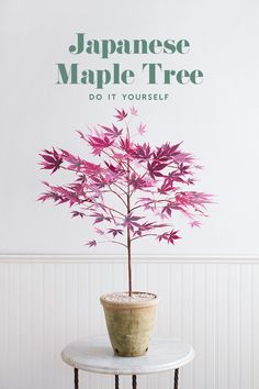 DIY Japanese Maple tree - The House That Lars Built Corrie Beth Hogg, a former Lars contributor, is coming out with her. House Plants Decor, Plant Decor, Diy Arts And Crafts, Easy Crafts, Paper Plants, Maple Tree, Japanese Maple, Interior Exterior, Diy Paper