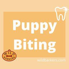 Puppy Biting, Puppies, Cubs, Pup, Newborn Puppies, Puppys, Doggies, Teacup Puppies