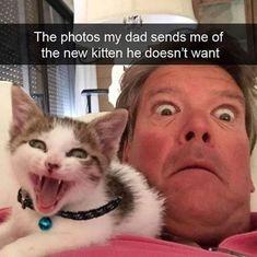 Cutest animals, i love cats, cute cats, cats and kittens, cute pe Cute Animal Memes, Animal Jokes, Cute Funny Animals, Cute Baby Animals, Funny Cute, Hilarious, Tier Wallpaper, Animal Wallpaper, Cute Kittens