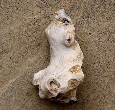 Side view of a flint figurine from the shrine at Moon Temple in Wessex. From THE LOST WORLD, by Terence Meaden The Lost World, Prehistory, Bronze Age, Stone Carving, Side View, Fertility, Temple, Lion Sculpture, British