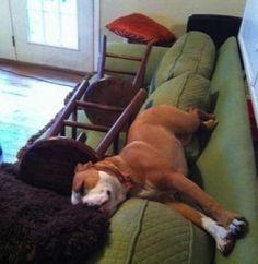 Unpost para aquellos que tienen perro
