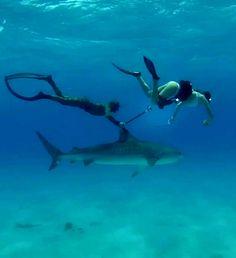 shark riding.