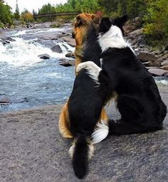 These Adorable BFF Dogs From Ontario Are Destroying The Internet's Heart