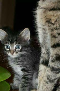 Jasmine kitty sweet little girl.