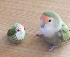 Cute Love Bird With It's Toy