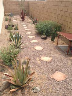 Native California tortoise habitat