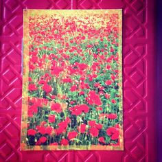 2013-06-08 #Postcard from #Germany (DE-2211298) via #postcrossing #poppies #flower #Padgram