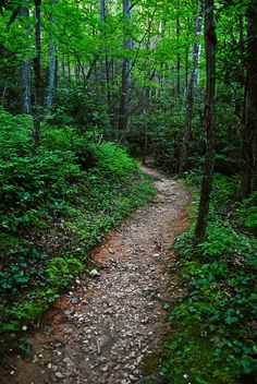 Path in Smoky Mountain National Park