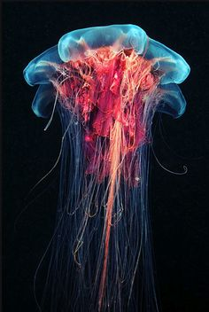 Incredible Jelly Fish Photography | Sally Lee by the Sea