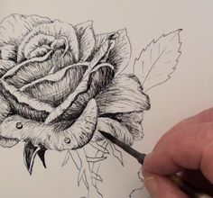 Free Art Lesson - How to Draw a Rose in Pen and Ink — Online Art Lessons Ink Pen Drawings, Love Drawings, Drawing Techniques, Drawing Tips, Sketch Painting, Pen Art, Art Tutorials, Online Art, Art Lessons