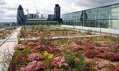 GSB Best Practice Awards: British Land Biodiversity. British Land - winner of the Guardian Sustainable Business award for biodiversity. PR