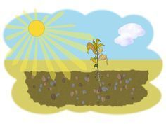 Free Visuals: Parable of the sower for young children Jesus tells a parable about a sower and then explains its meaning. Matthew 13:1-23, Mark 4:1-20, Luke 8:4-15